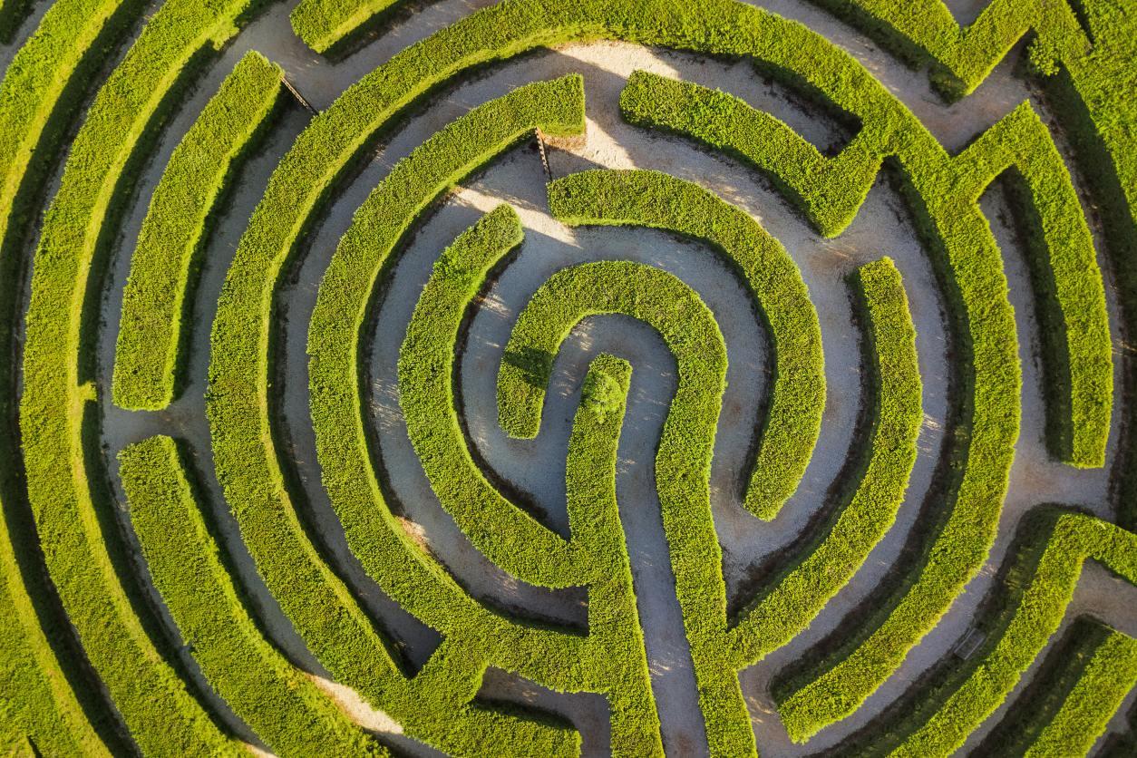 11Aerial view of green bush maze